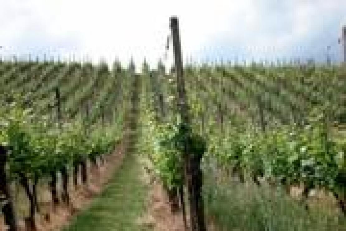 Tour Borgogna, Champagne, Alsazia. 8-11 Maggio 2011. Appunti di viaggio