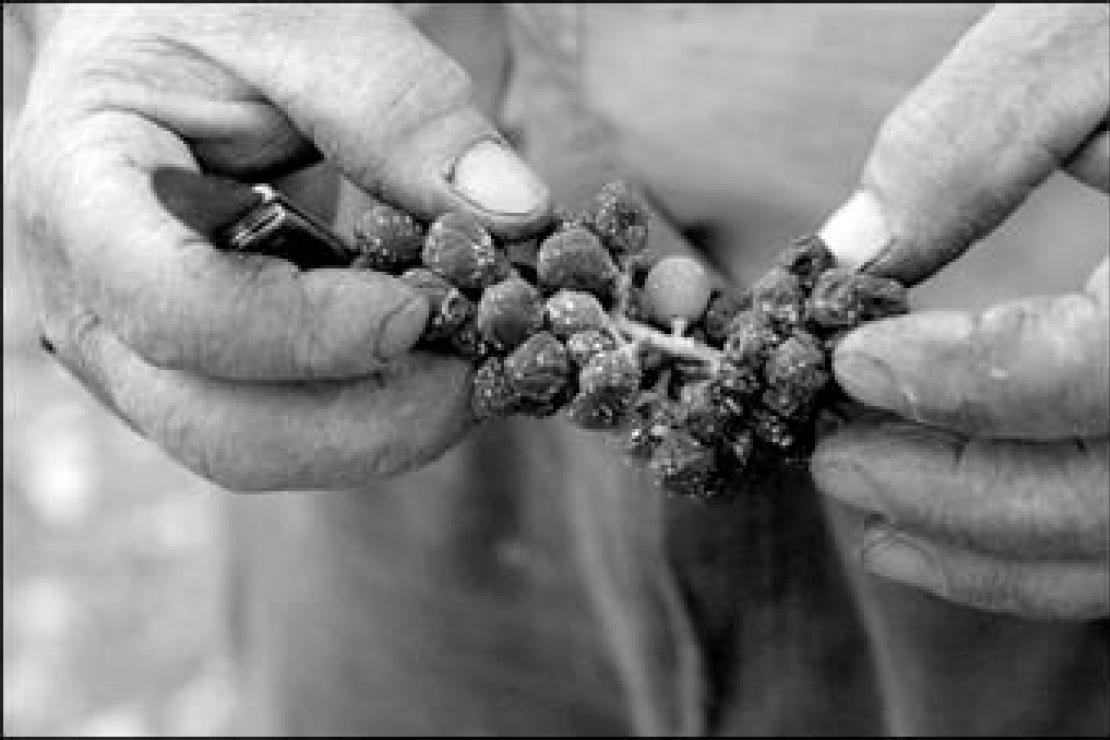 Impariamo a conoscere i Vini Naturali e i Biodinamici