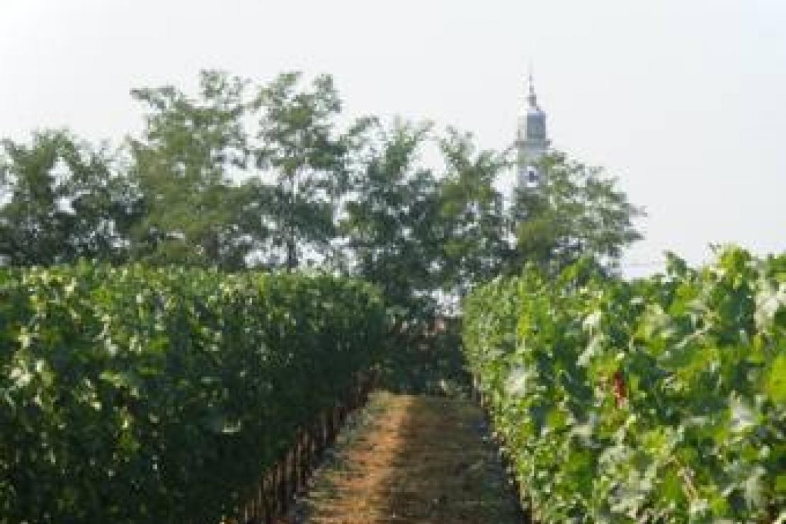 Un nuovo protagonista tra i vini bresciani a Natale: è il Marzemino Doc