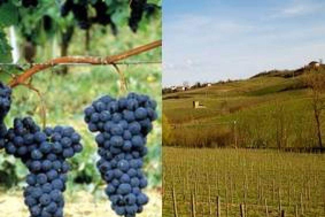 L'espressione del territorio nei vitigni più vocati dell'Oltrepò Pavese: il Pinot Nero ed il Riesling