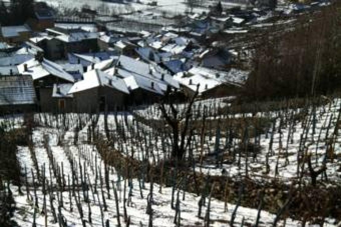 Ais Sondrio alla scoperta dei protagonisti della viticoltura valtellinese