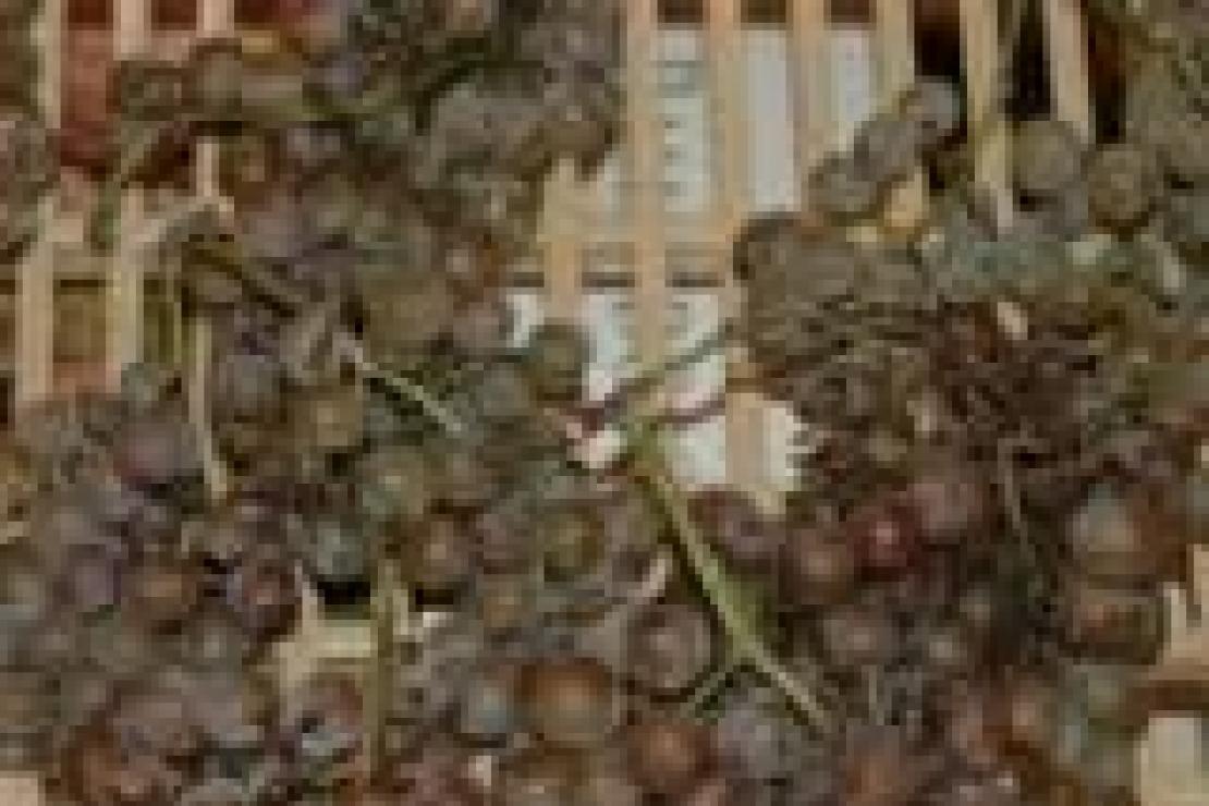 La dolcezza del Friuli: il Ramandolo