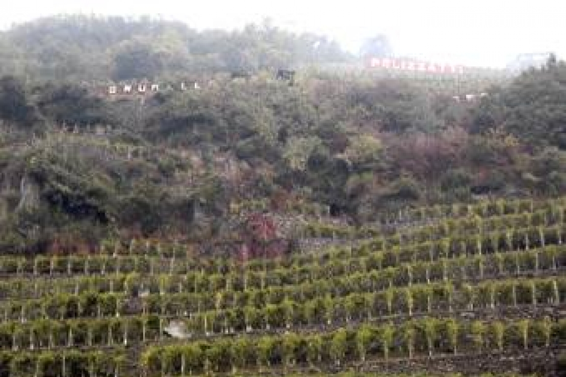 I vini di Arpepe