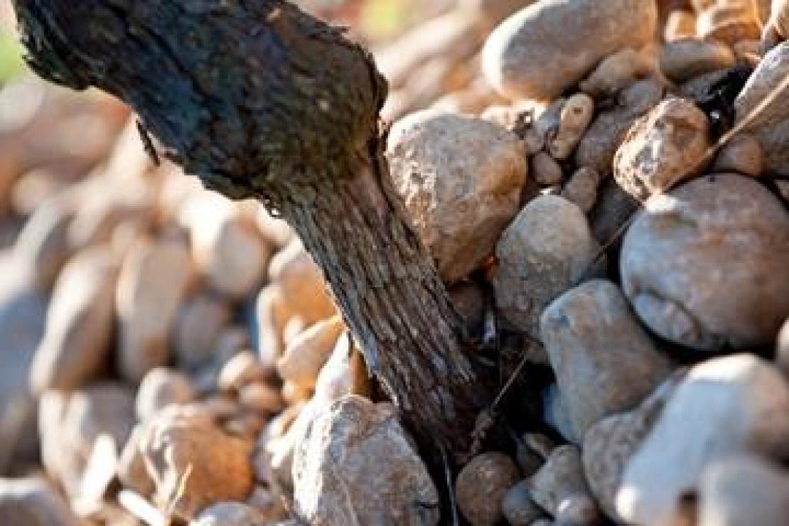 I vini del Friuli Venezia Giulia conquistano la Brianza