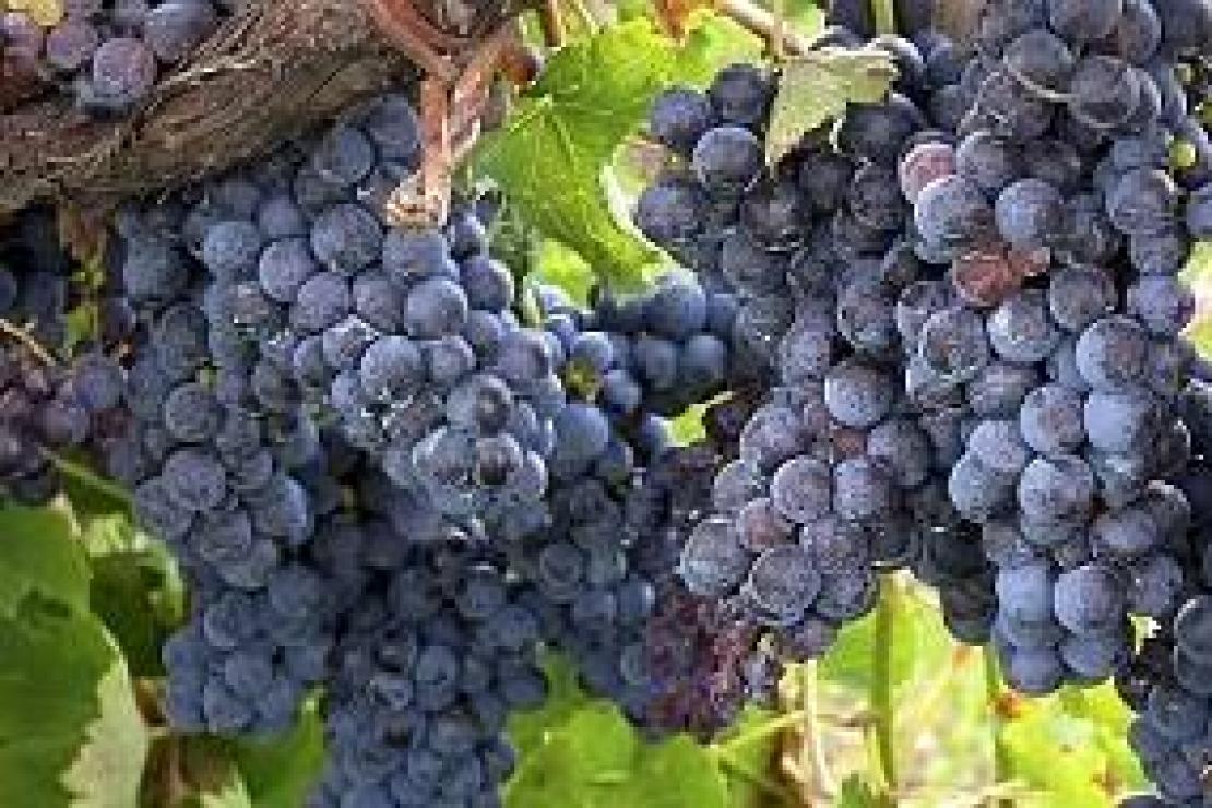 Il Sannio e i Sanniti: guerrieri come un tempo, dal vino forte e gentile