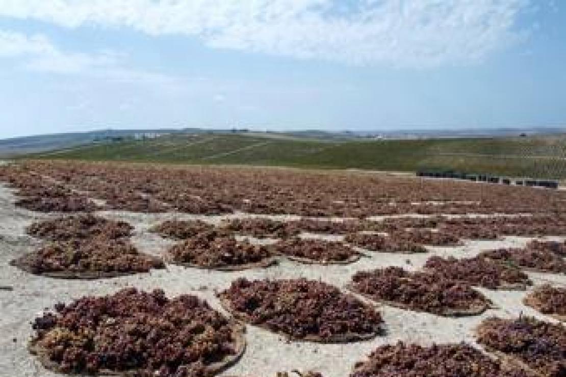 Il vento caldo di Jerez soffia sui Colli Bergamaschi