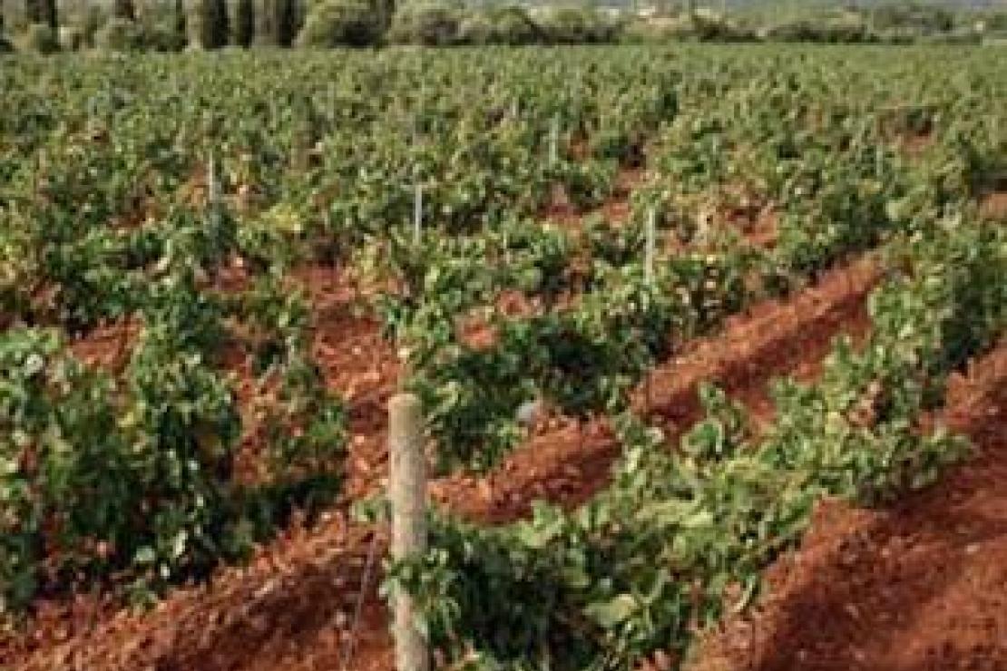 Ais Bergamo | I vini della terra del Carignano