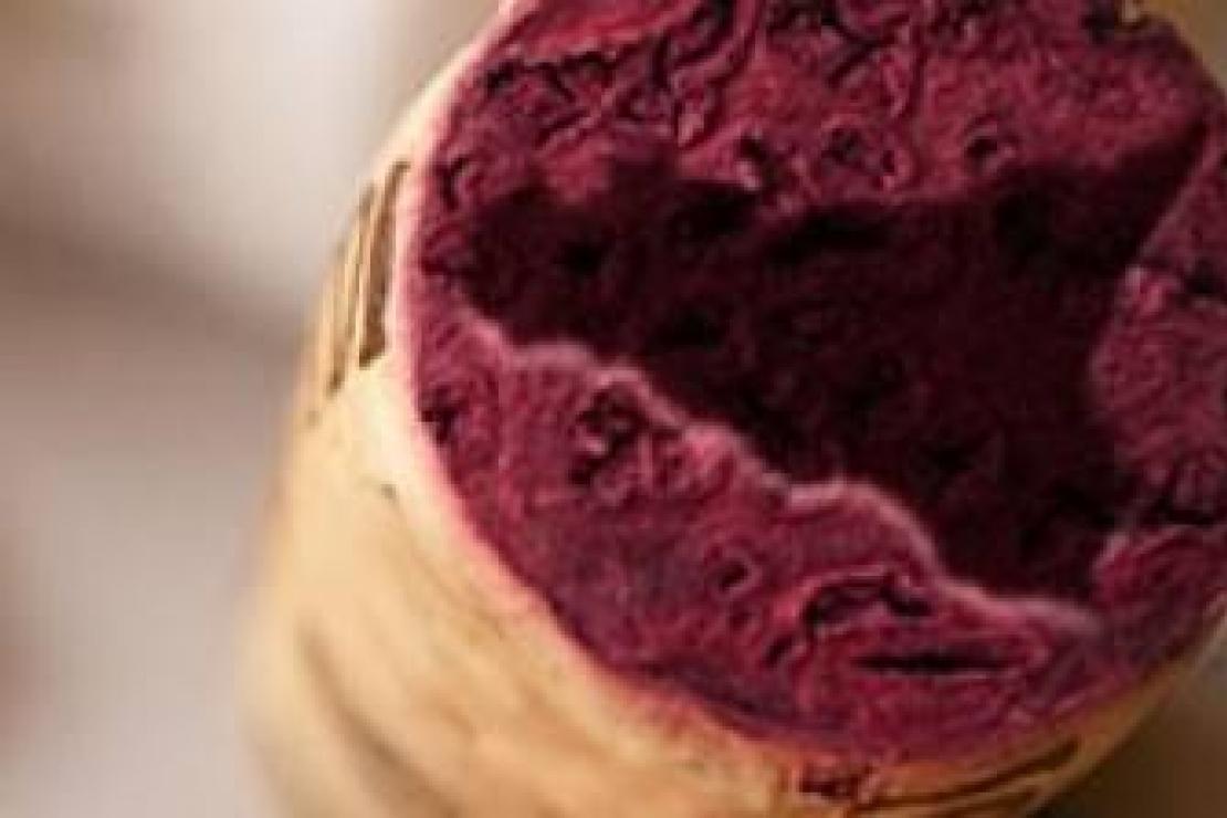 I vini della Sicilia con Nicola Bonera