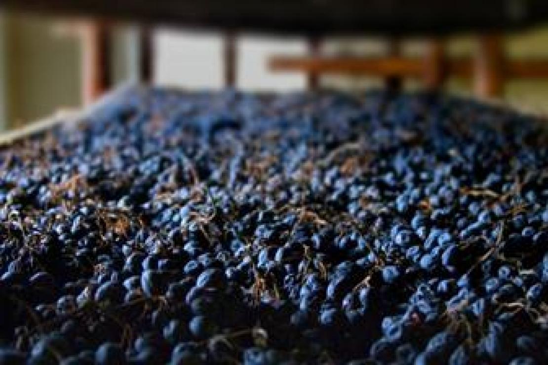 Ais Bergamo | Quando il vino si anima. L'Amarone
