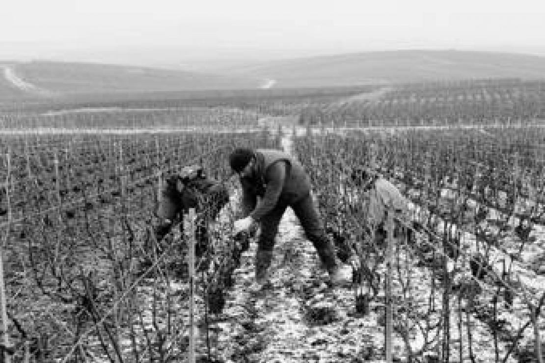 Ais Brescia | Champagne Bruno Paillard