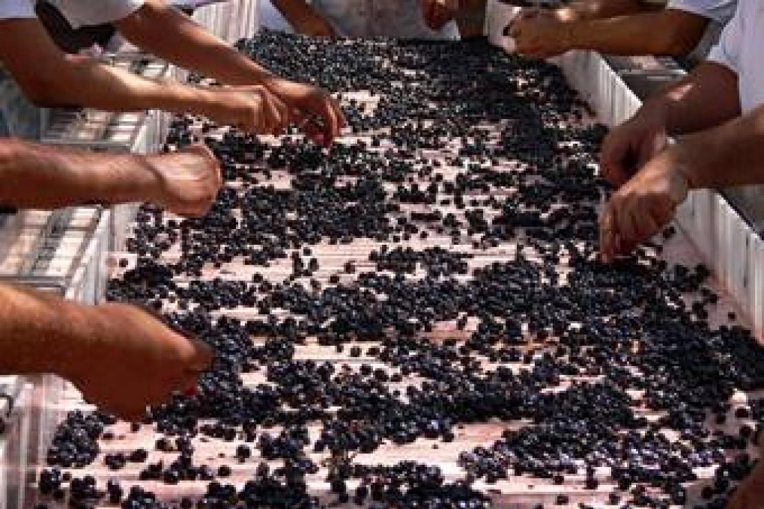 Ais Bergamo | I Vini Greci