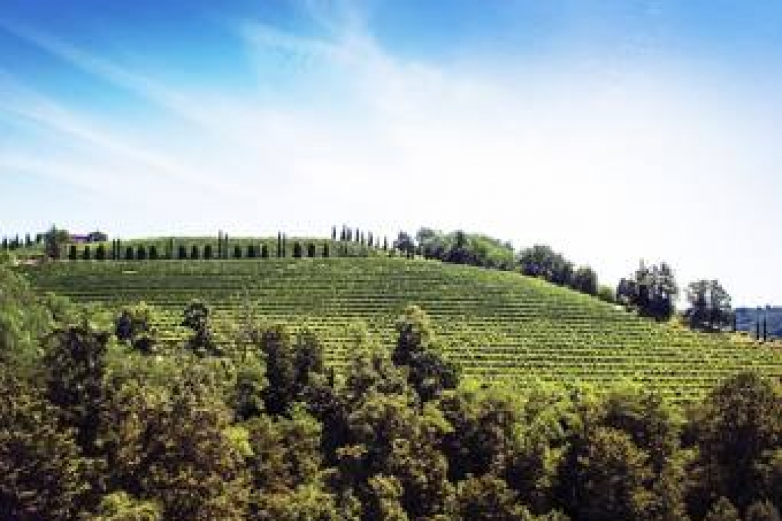 Ais Milano | Collio Day
