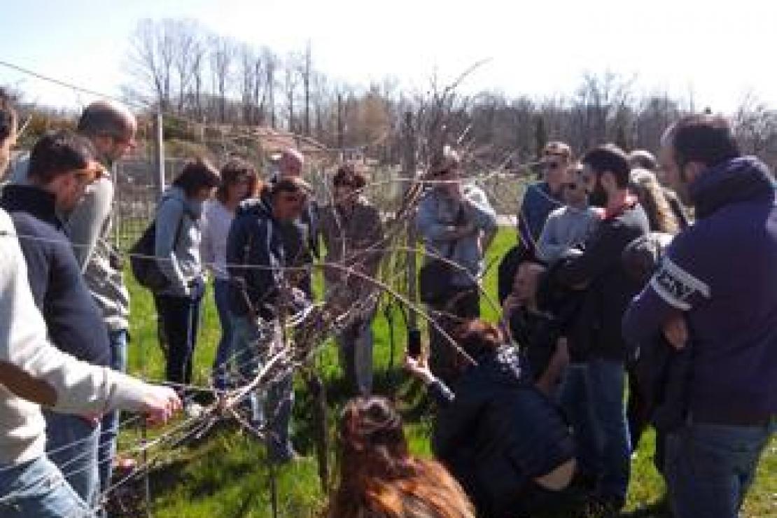 AIS Monza | Master in Viticoltura