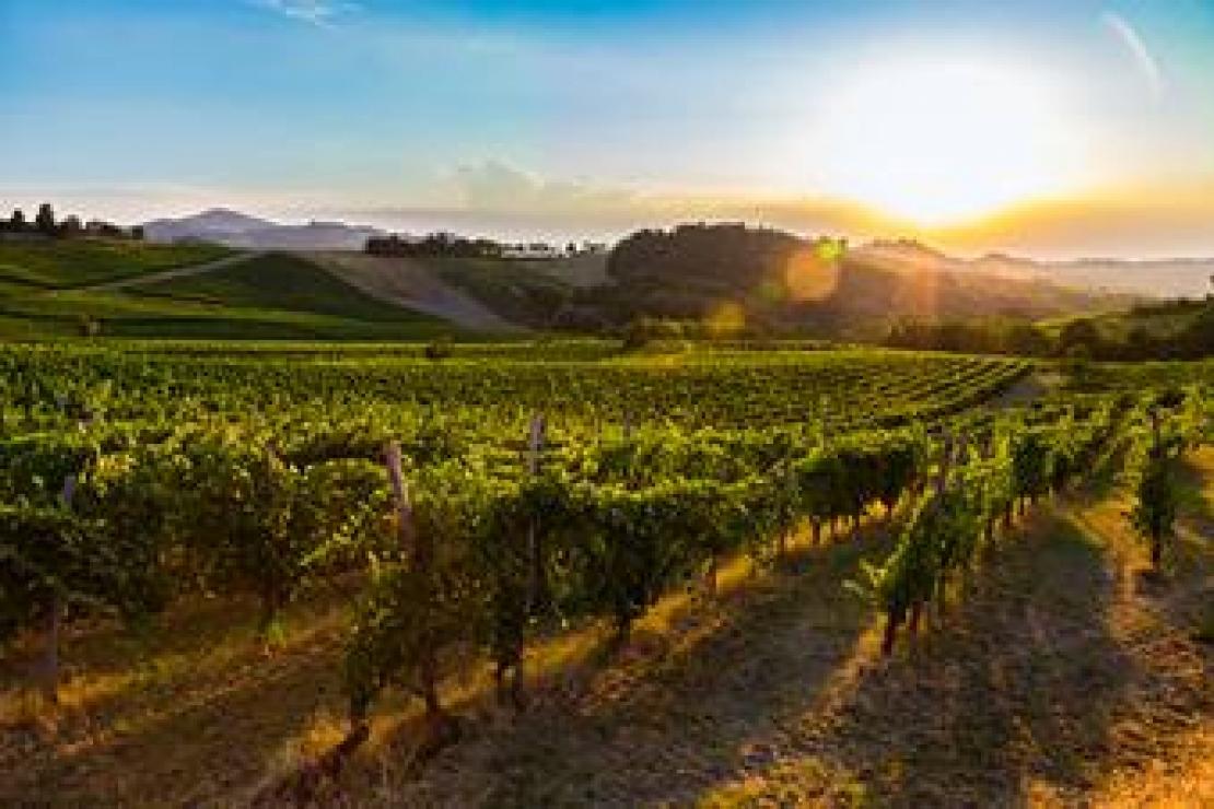 AIS Pavia | Analisi e studio del Pinot Nero in Oltrepò Pavese