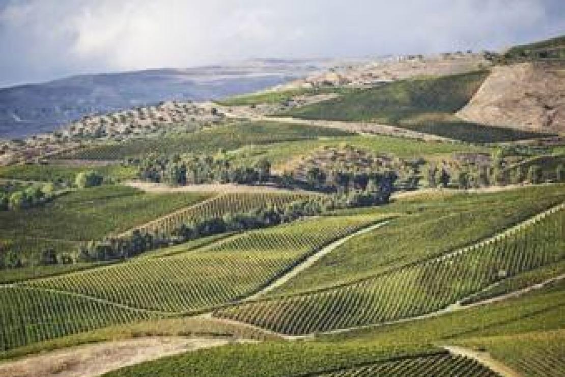 AIS Como | Tasca D'Almerita, duecento anni di lenta maturazione