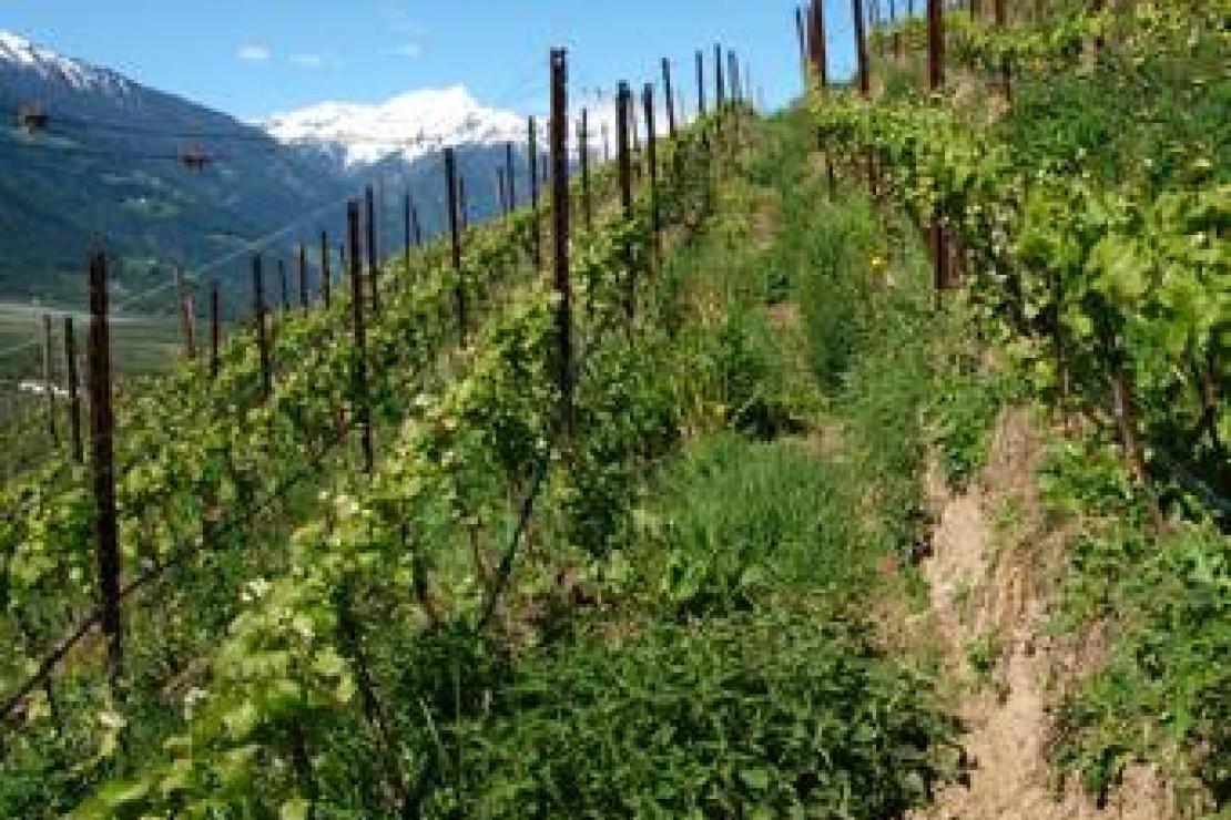 AIS Varese | Il giro dell�Alto Adige nel bicchiere