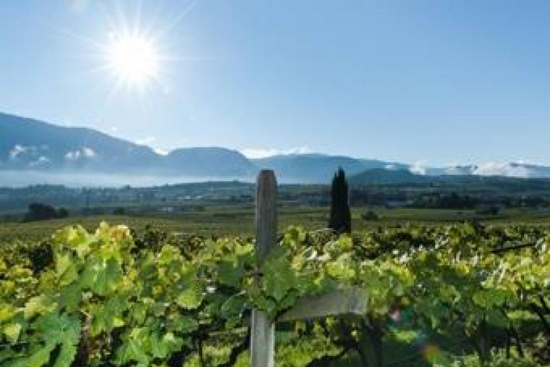 AIS Lecco | Viaggio nel mondo dei vini altoatesini