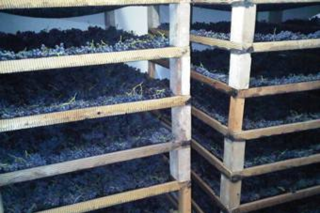 AIS Mantova | Il Moscato di Scanzo di Biava