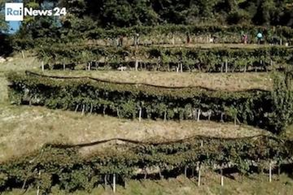Il Moscato di Scanzo su Rai News24 con AIS Lombardia