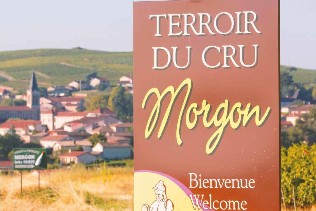"""Morgon  Irresistibile """"nobiltà popolare"""""""