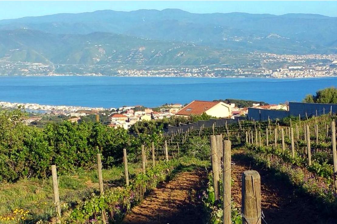Faro, il vino dei due mari