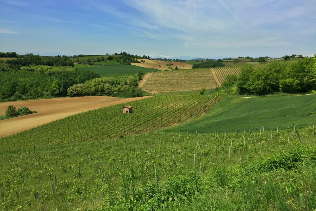 Ruché di Castagnole Monferrato. Il Piemonte che non (ti) aspetti