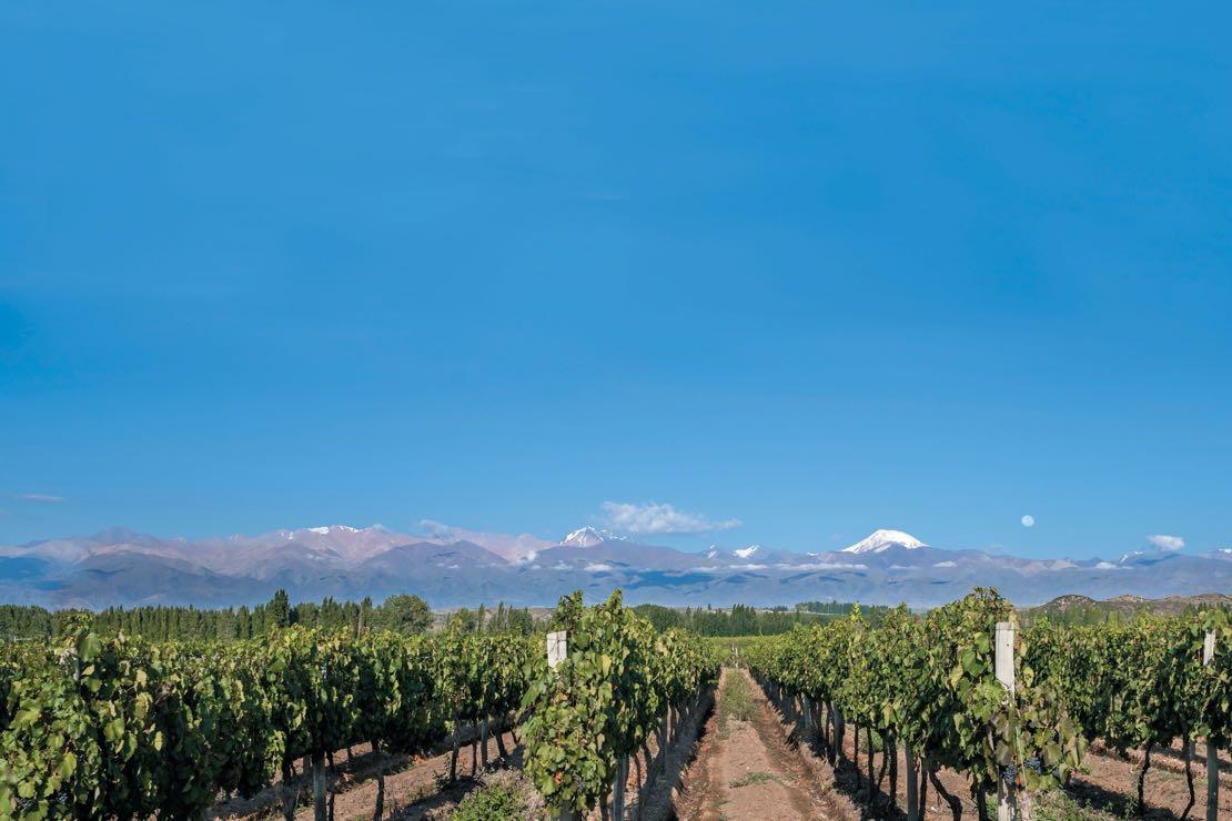Il vino argentino: figlio dell'Italia e delle montagne