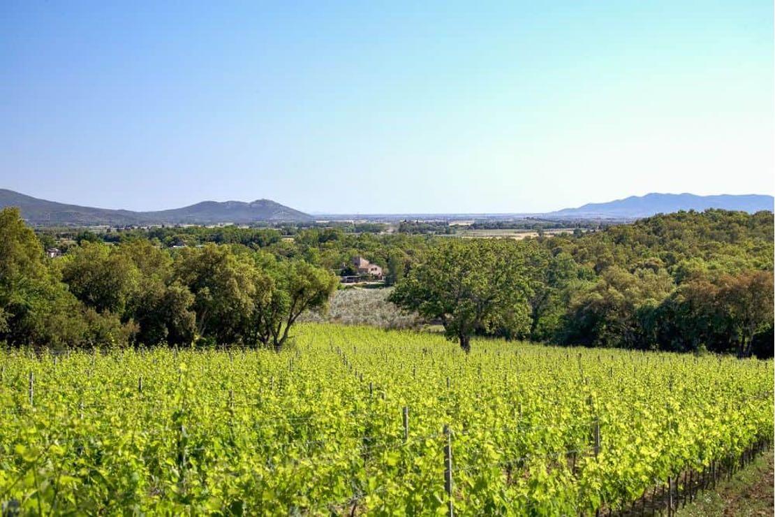 """La Maremma toscana e i """"suoi"""" vitigni internazionali"""
