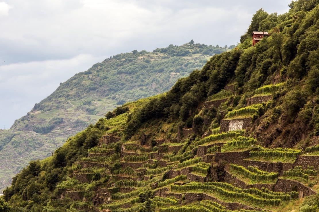 Dopo un'annata complicata, la Valtellina del vino guarda avanti con ottimismo