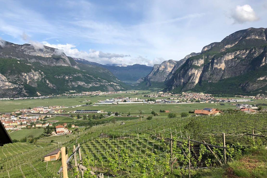 VINIterritorio, il concorso della Fondazione Edmund Mach che valorizza i vini del Trentino-Alto Adige