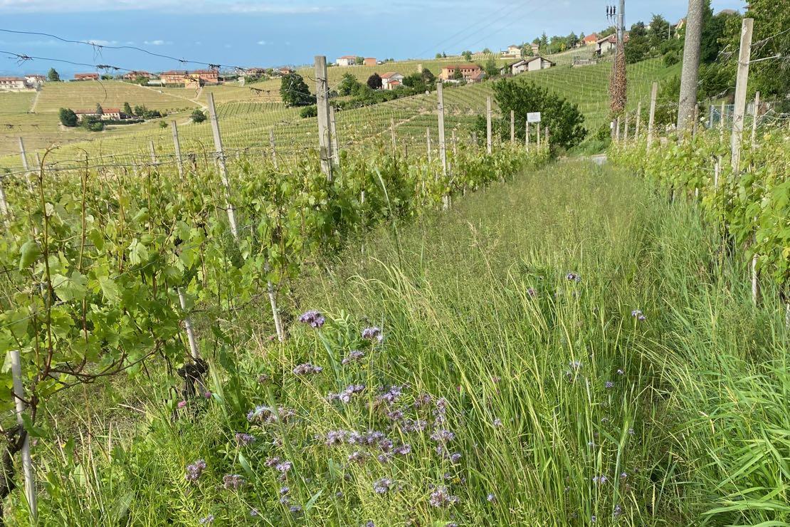 Normativa: nasce il Comitato della sostenibilità vitivinicola