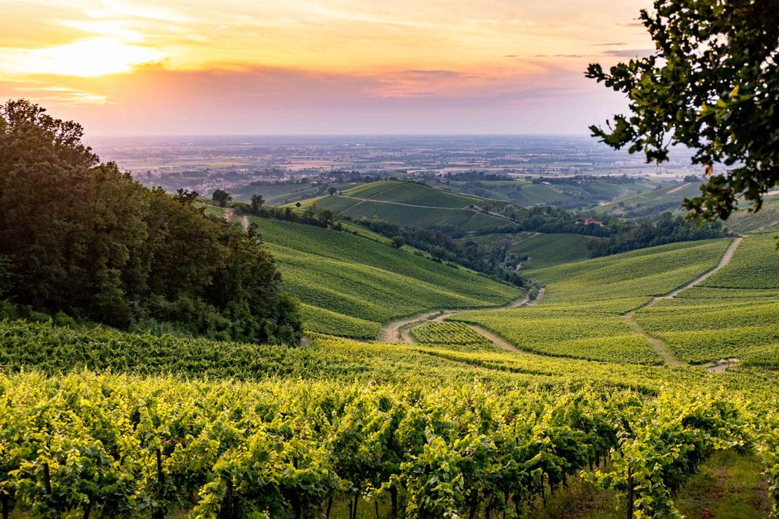 Oltrepò, Terra di Pinot Nero: un territorio, un vitigno, due eccellenze