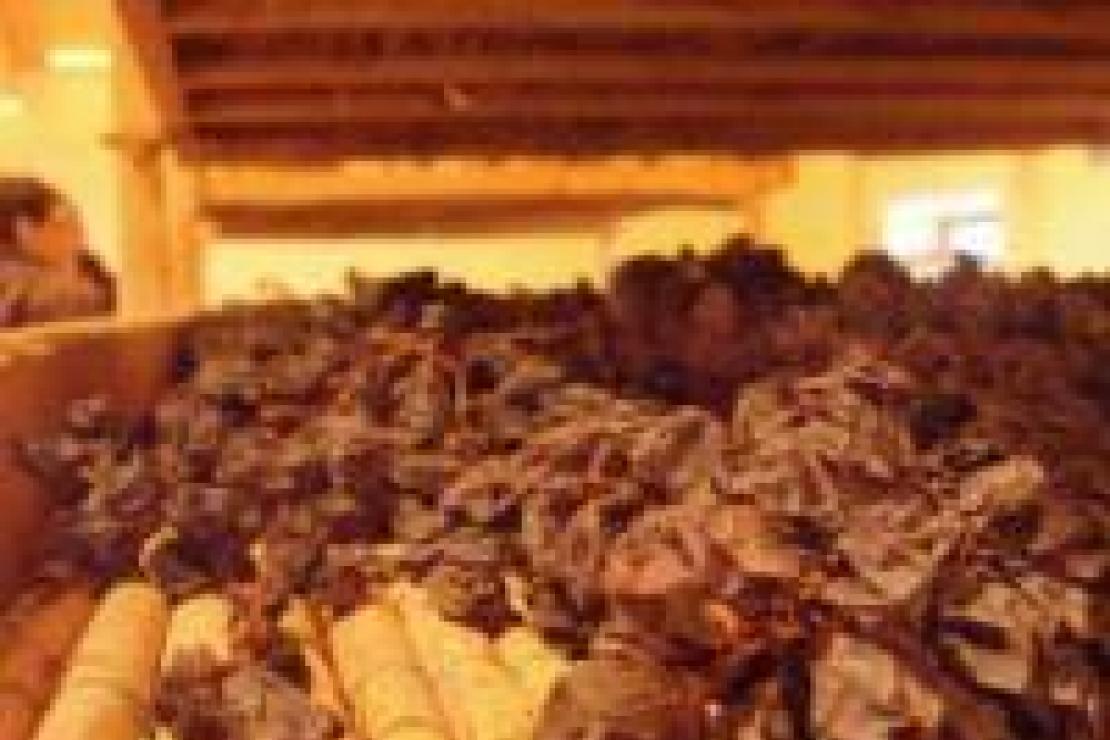 Verticale Bertani. L'amarone in 4 annate straordinarie