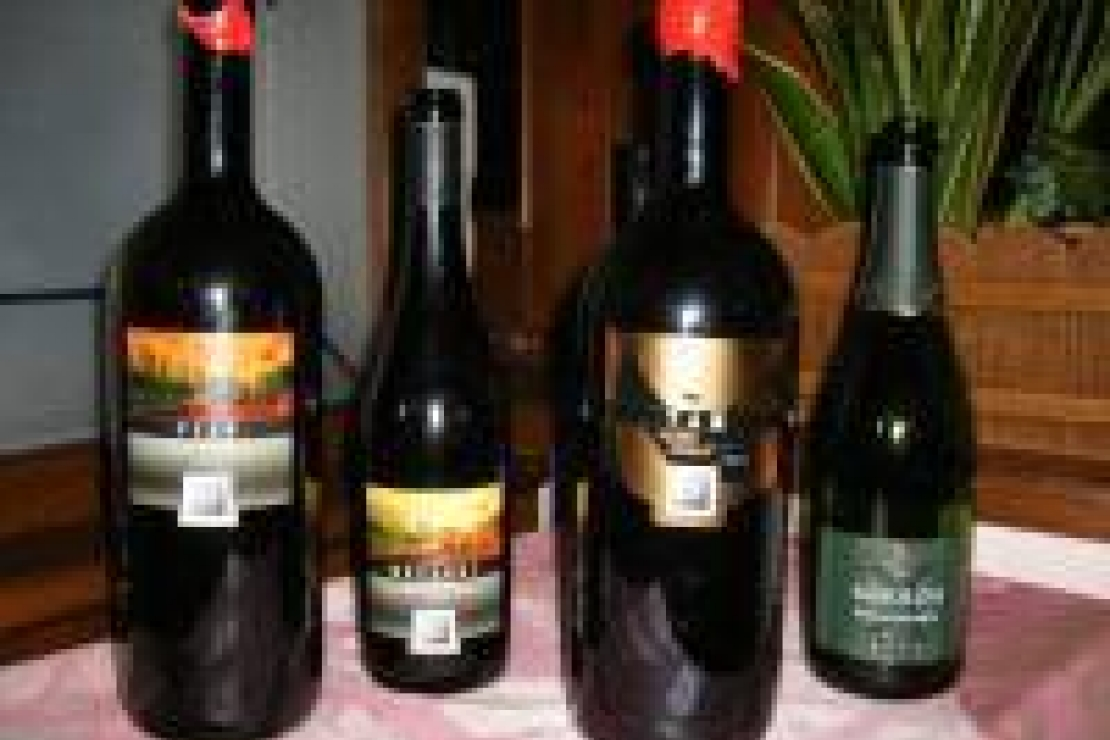 Bolgheri ed i vini di Batzella