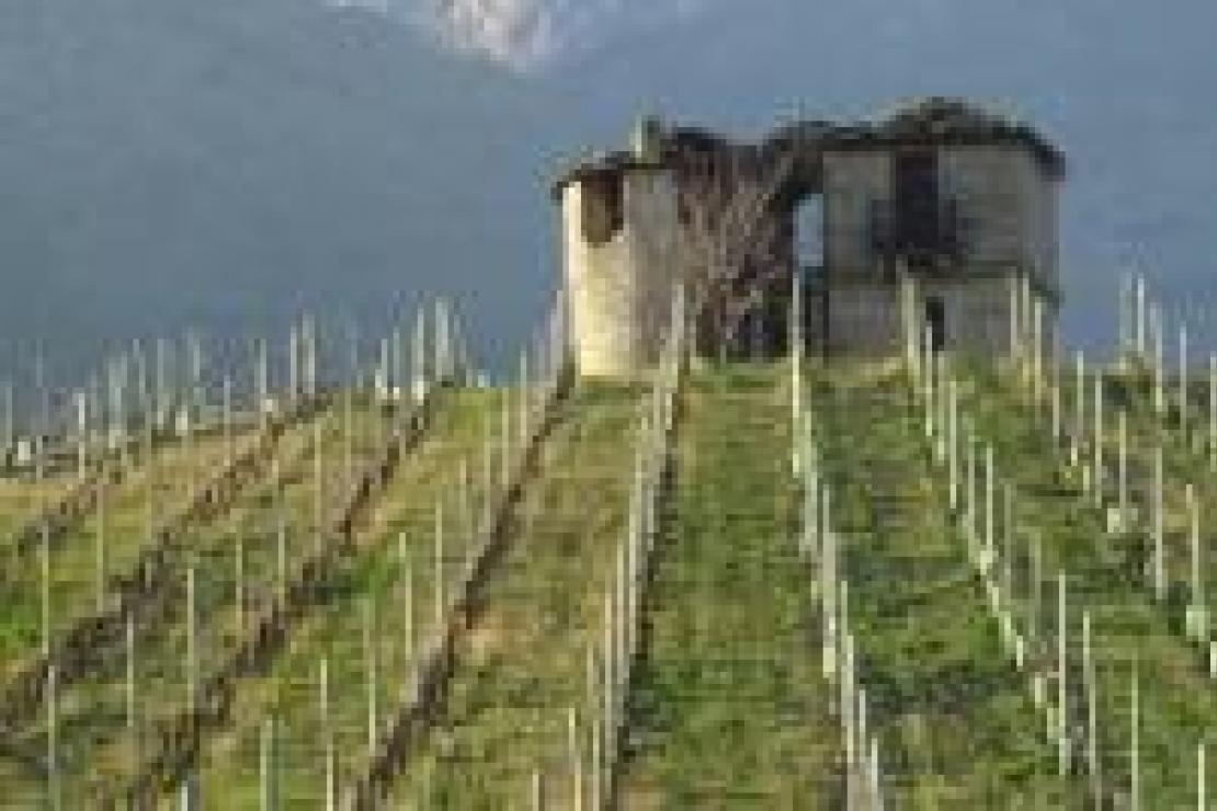 I grandi vini d'Italia