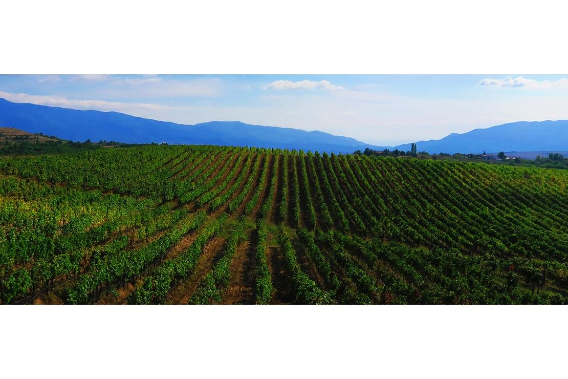 La Bulgaria e i suoi vini
