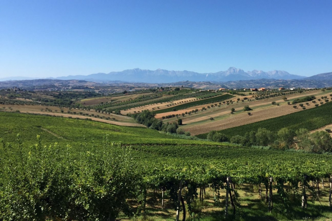 Alla (ri)scoperta dell'Abruzzo: viaggio tra vitigni autoctoni e potenzialità nascoste