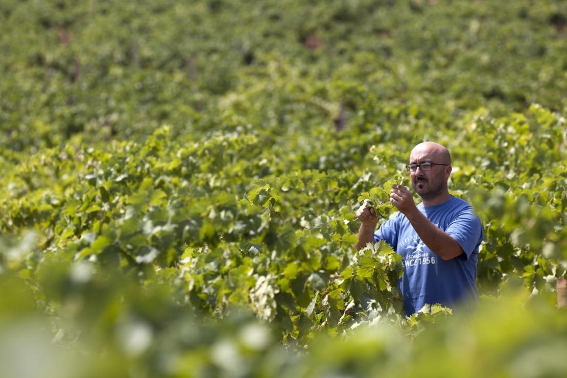 """Nino Barraco, """"L'artigiano del vino"""". Verticale di Vignammare 2012-2017"""