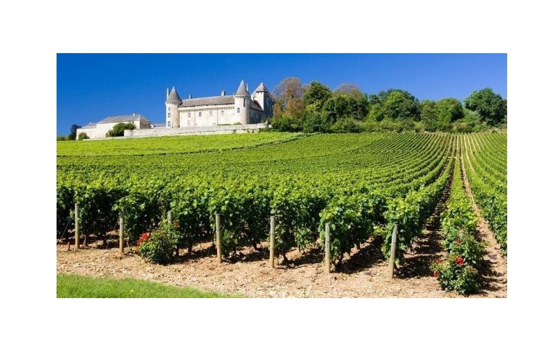 La Borgogna delle vecchie vigne