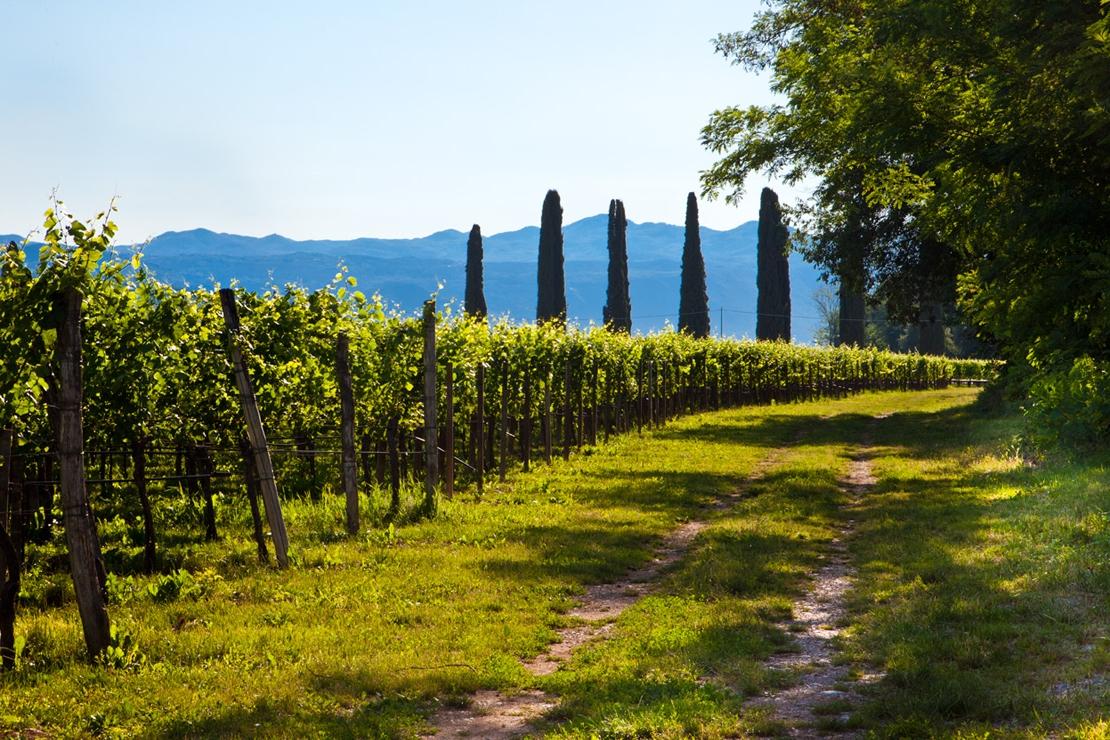 La cantina Lis Neris e i suoi splendidi vini
