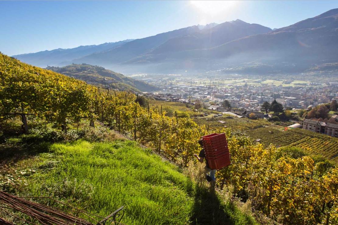 Valtellina: il legame profondo della terra e l'amore per un vitigno | Secondo appuntamento