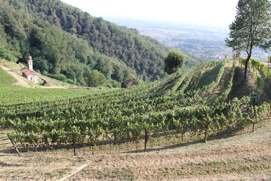 Verticale Pinot Nero Tassodine