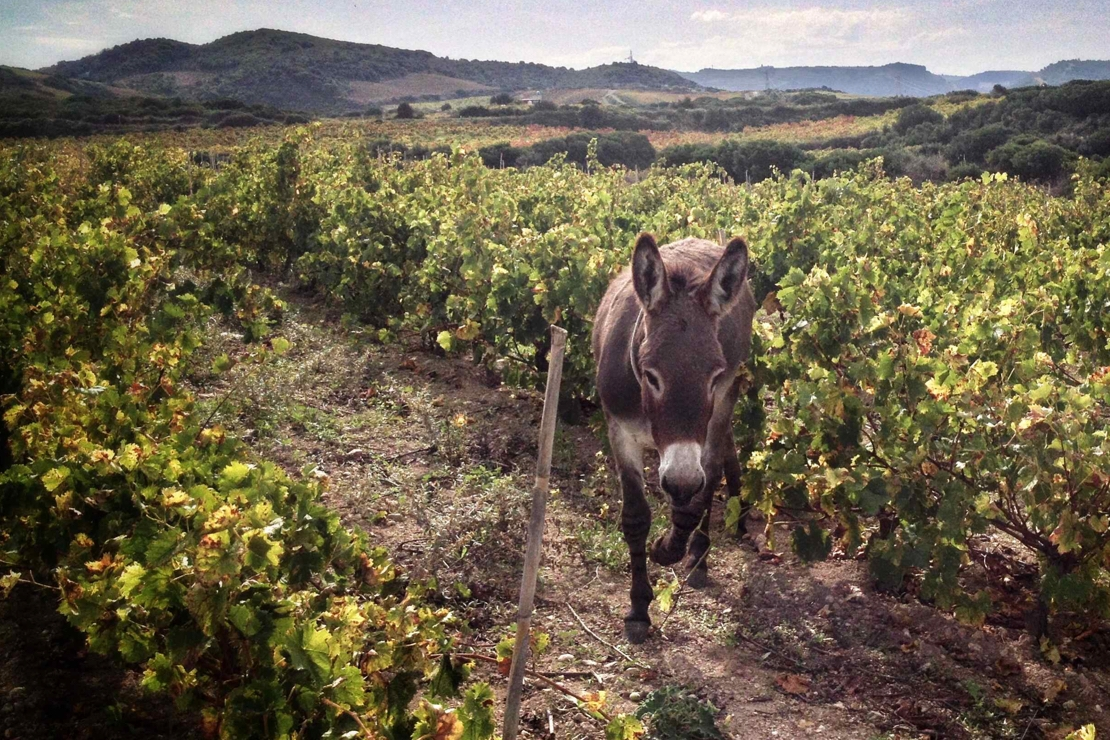 """Conversazioni libere sul mondo dei """"vini naturali"""""""