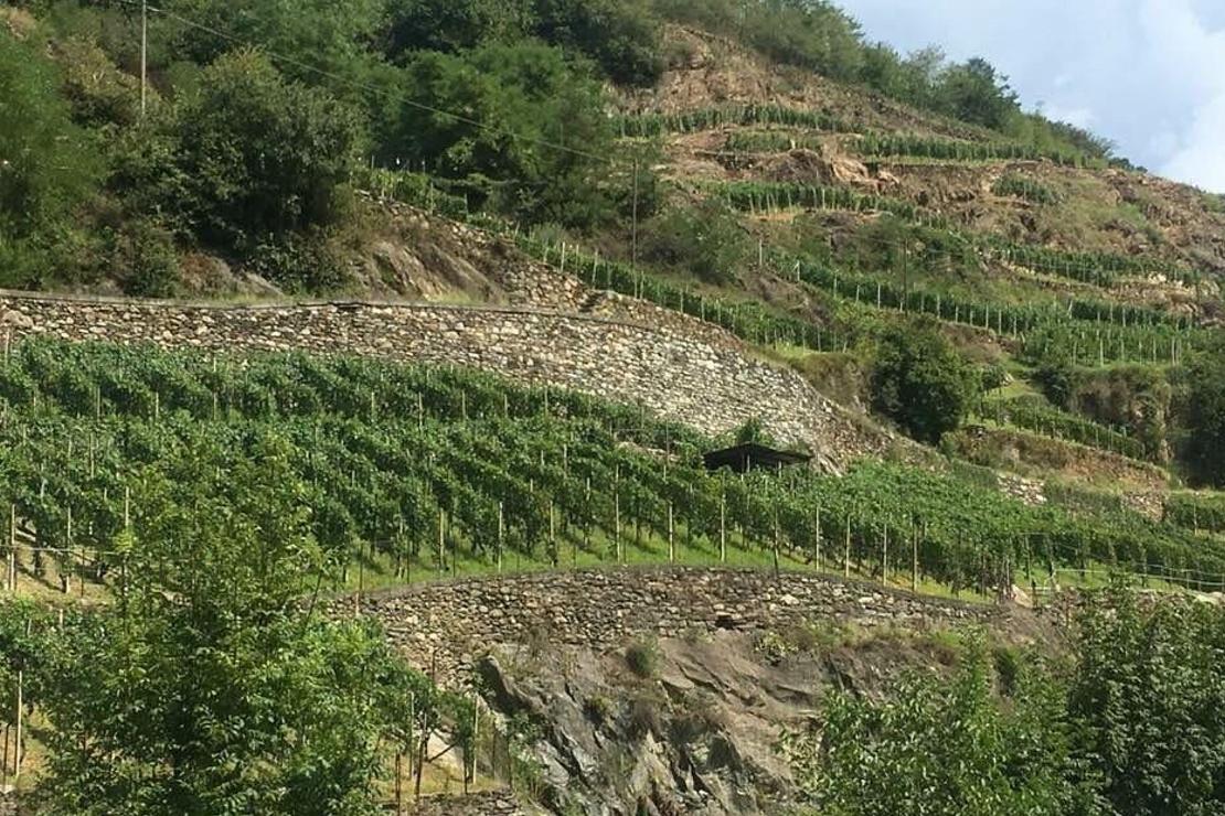 La Valtellina e il suo nebbiolo: appunti di viaggio e di una vita