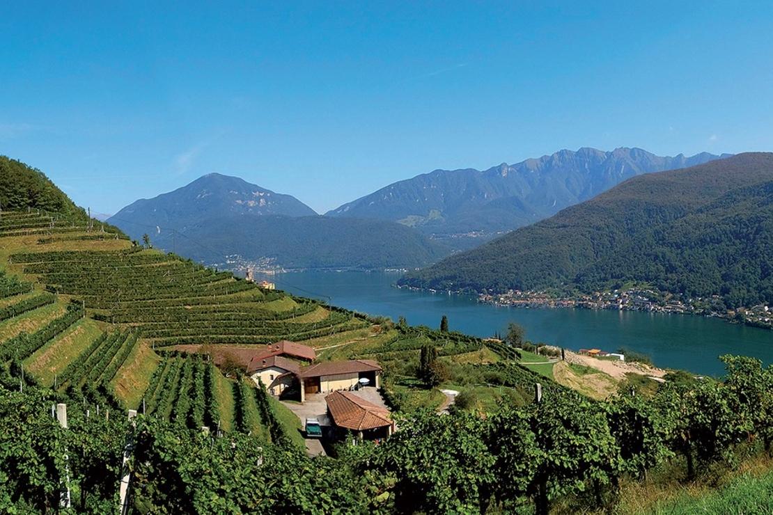 Ticino. La seconda patria del merlot
