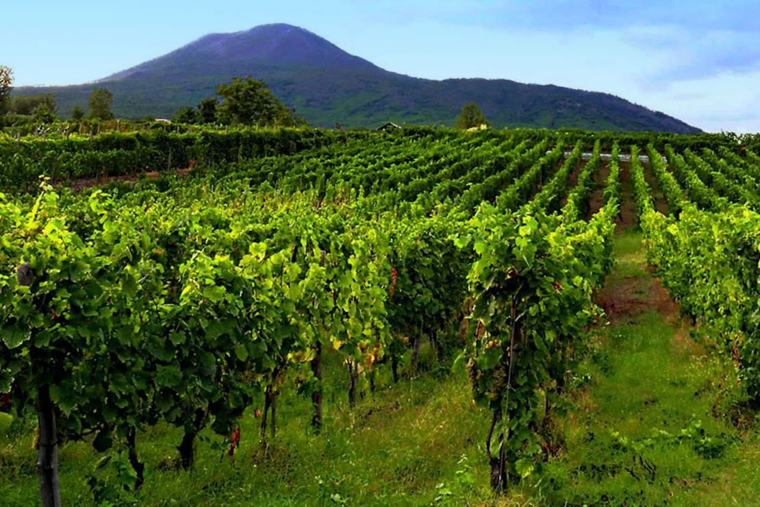 I vini del Vesuvio