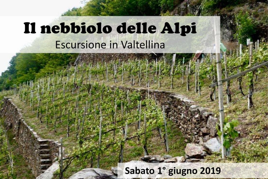 Il nebbiolo delle Alpi. Escursione in Valtellina