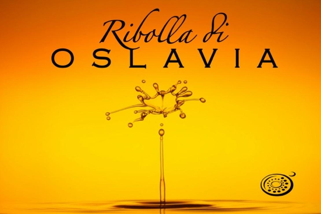 Ribolla di Oslavia