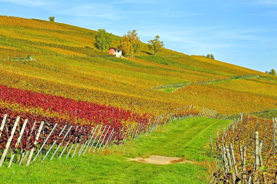 I cambiamenti climatici in viticoltura