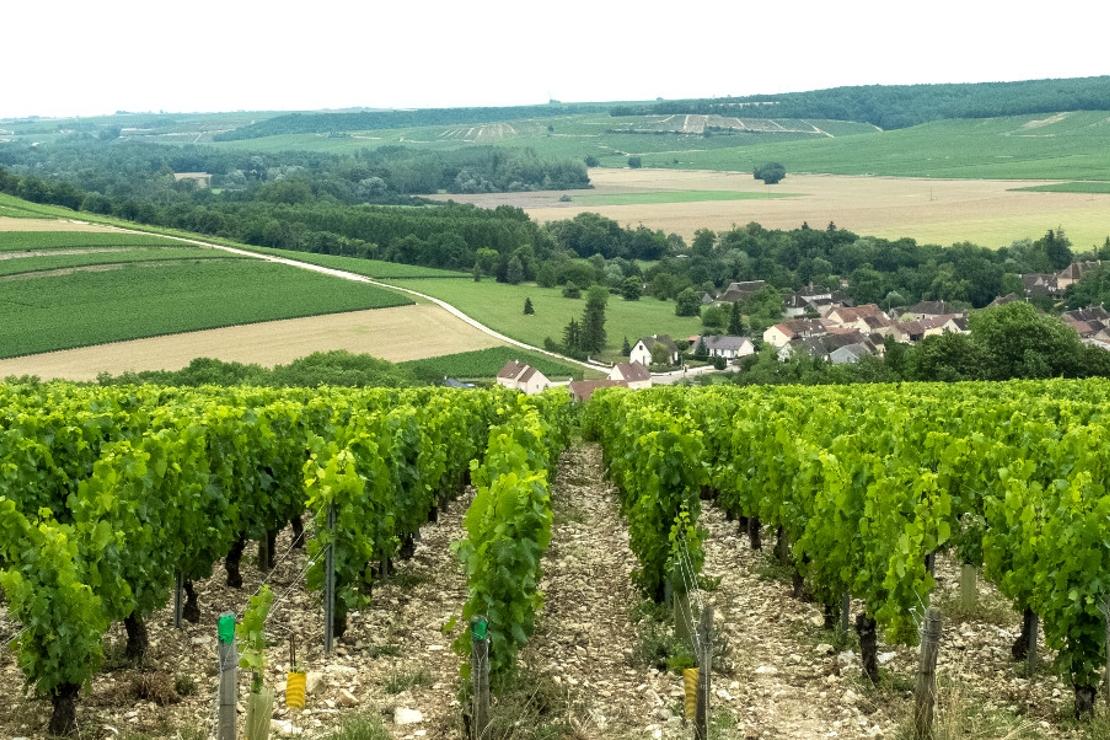 Chablis, Borgogna di frontiera. Con Samuel Cogliati